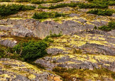 Layers of Lichen