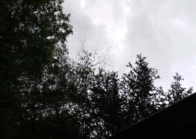 Leafy Skies